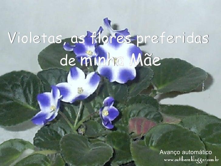 Avanço automático Violetas, as flores preferidas  de   minha Mãe