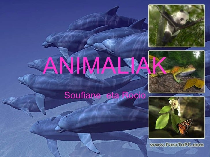 ANIMALIAK Soufiane  eta Rocio