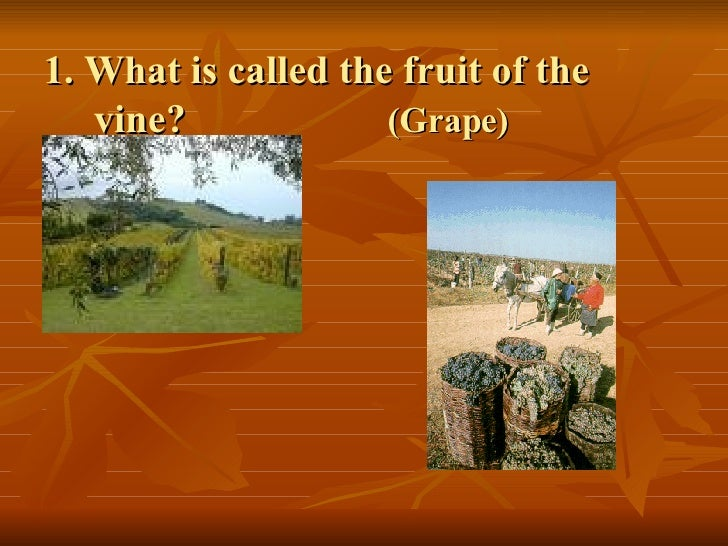 1. What is called the fruit of the    vine?  (Grape)