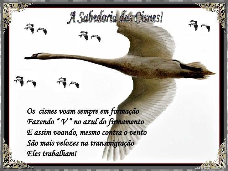 """A Sabedoria dos Cisnes! Os  cisnes voam sempre em formação Fazendo """" V """" no azul do firmamento E assim voando, mesmo contr..."""