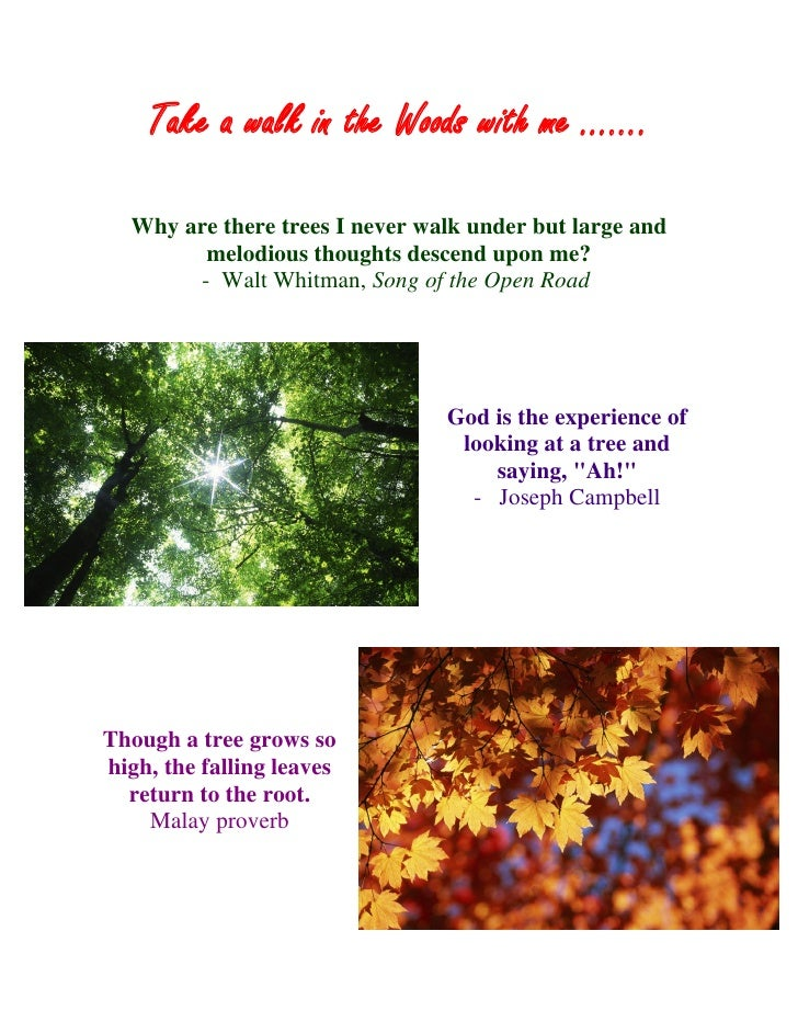 Take a walk in the Woods with me …….    Why are there trees I never walk under but large and         melodious thoughts de...