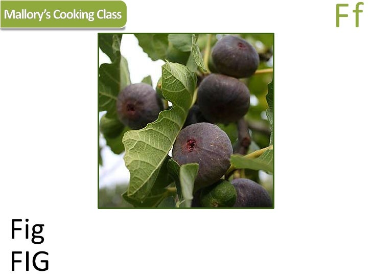 Mallory's Cooking Class<br />Ff<br />Fig<br />FIG<br />