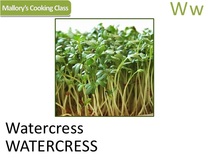 Mallory's Cooking Class<br />Ww<br />Watercress<br />WATERCRESS<br />