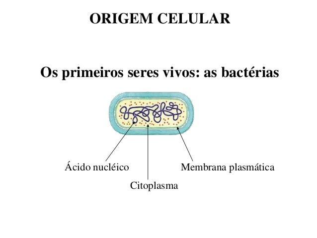 ORIGEM CELULAR  Os primeiros seres vivos: as bactérias  Ácido nucléico  Membrana plasmática  Citoplasma