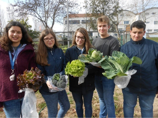 A13- sowing local crops Our students planted winter crops in october and november: cabbage of various types (heart, brocco...