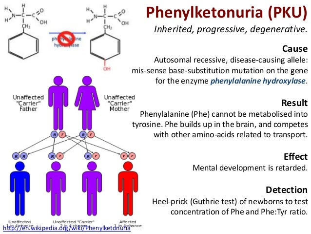 Phenylketonuria cure