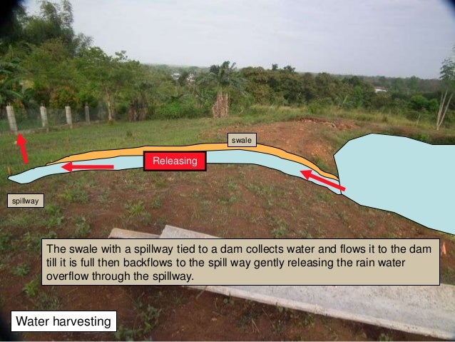 A1 aquaponics intro and design for Koi pond overflow design