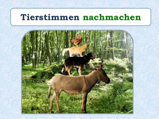 """Paul ________ die Tierstimmen von den """"Bremer Stadtmusikanten"""" sehr gut ______. macht nach"""