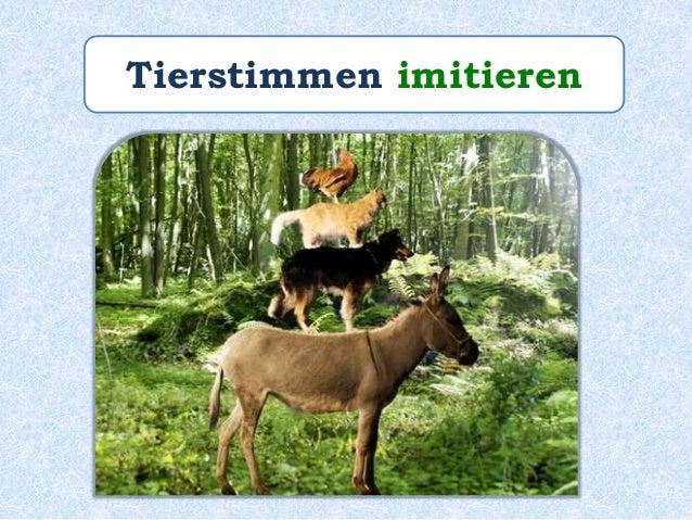 """Paul _________ die Tierstimmen von den """"Bremer Stadtmusikanten"""" sehr gut. imitiert"""
