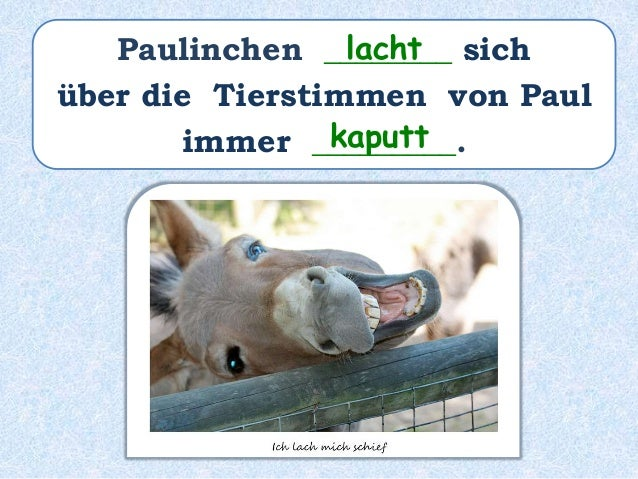 Paulinchen ________ sich über die Tierstimmen von Paul immer __________________. hat kaputtgelacht