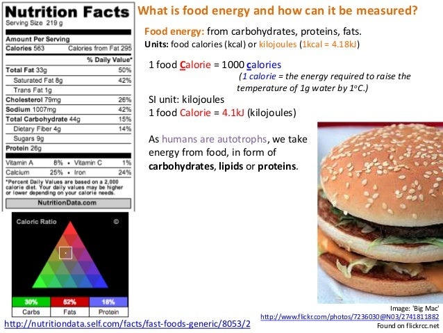 A2 Energy in Human Diets Slide 3