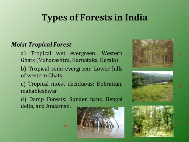 forest resources Forest resources in india - informative & researched article on forest resources in india from indianetzone, the largest free encyclopedia on india.