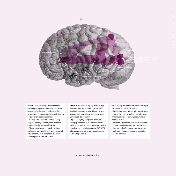 na podstawie a. chatterjee, the neural organisation of spatial thought and language                                       ...