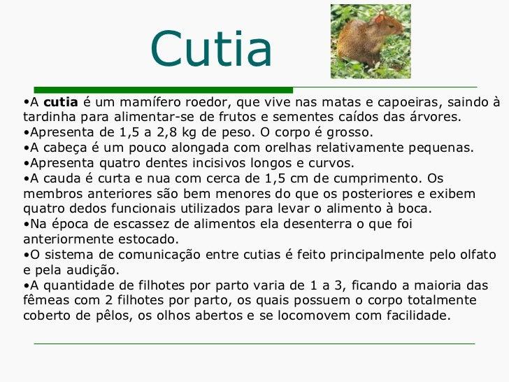 Cutia <ul><li>A  cutia  é um mamífero roedor, que vive nas matas e capoeiras, saindo à tardinha para alimentar-se de fruto...