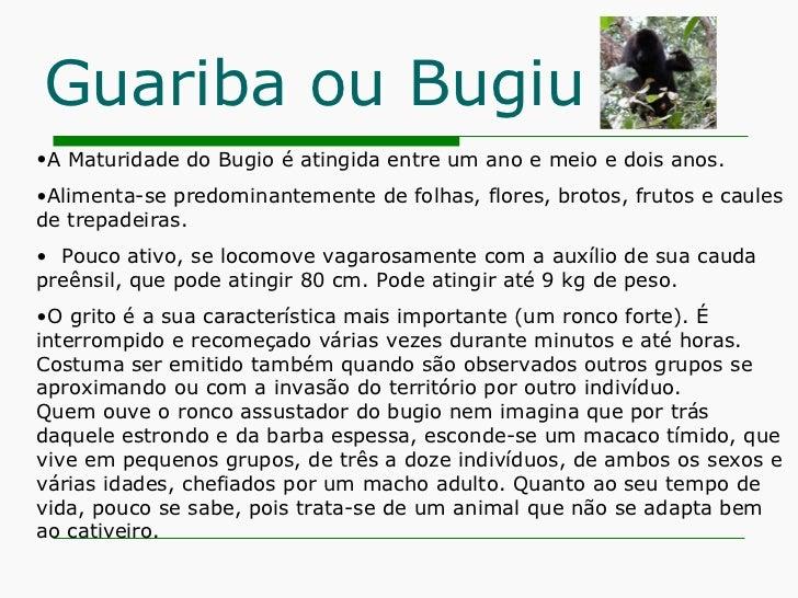 Guariba ou Bugiu <ul><li>A Maturidade do Bugio é atingida entre um ano e meio e dois anos.  </li></ul><ul><li>Alimenta-se ...
