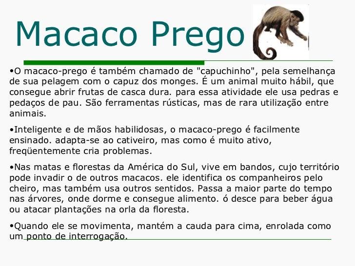 Macaco Prego <ul><li>O macaco-prego é também chamado de &quot;capuchinho&quot;, pela semelhança de sua pelagem com o capuz...