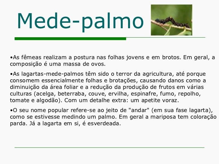 Mede-palmo <ul><li>As fêmeas realizam a postura nas folhas jovens e em brotos. Em geral, a composição é uma massa de ovos....