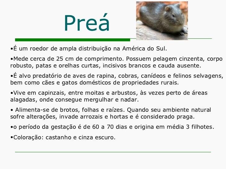 Preá <ul><li>É um roedor de ampla distribuição na América do Sul. </li></ul><ul><li>Mede cerca de 25 cm de comprimento. Po...