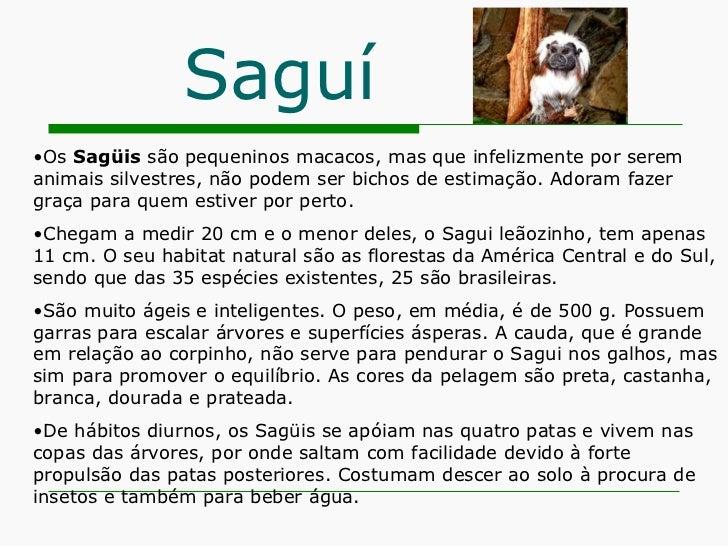 Saguí <ul><li>Os  Sagüis  são pequeninos macacos, mas que infelizmente por serem animais silvestres, não podem ser bichos ...