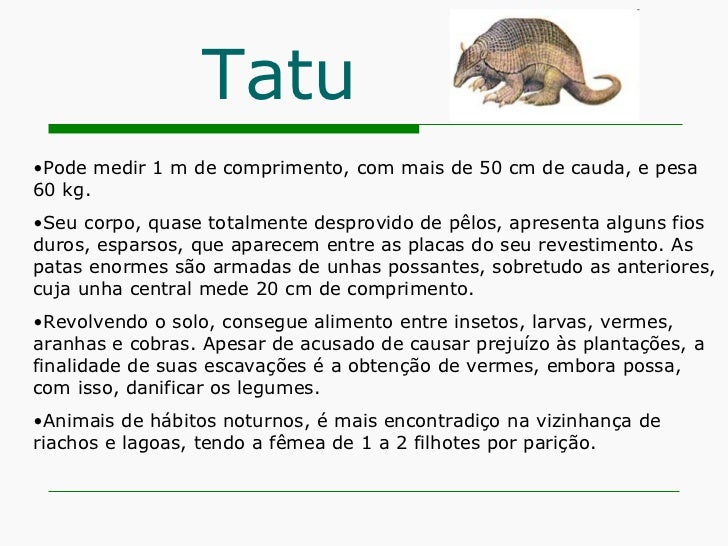 Tatu <ul><li>Pode medir 1 m de comprimento, com mais de 50 cm de cauda, e pesa 60 kg. </li></ul><ul><li>Seu corpo, quase t...