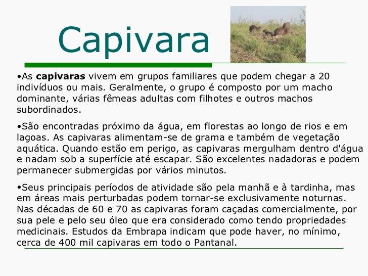 Capivara <ul><li>As  capivaras  vivem em grupos familiares que podem chegar a 20 indivíduos ou mais. Geralmente, o grupo é...