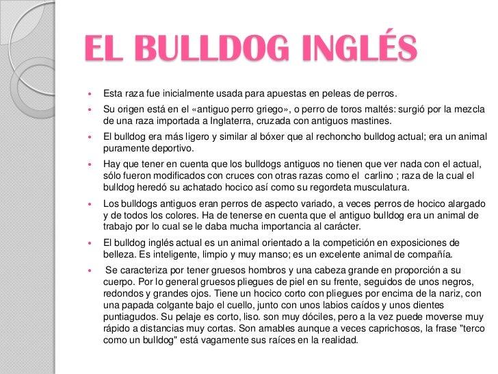 EL BULLDOG INGLÉS   Esta raza fue inicialmente usada para apuestas en peleas de perros.   Su origen está en el «antiguo ...