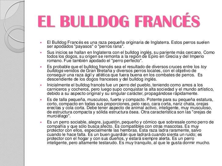 EL BULLDOG FRANCÉS   El Bulldog Francés es una raza pequeña originaria de Inglaterra. Estos perros suelen    ser apodados...
