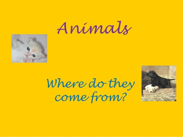 Animals Where do they come from?