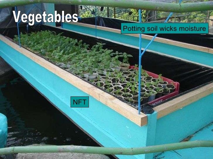 NFT Potting soil wicks moisture Vegetables