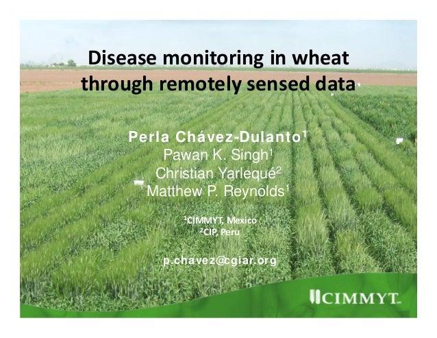 Disease monitoring in wheat through remotely sensed data Perla Chávez-Dulanto1 Pawan K. Singh1 Christian Yarlequé2 Matthew...