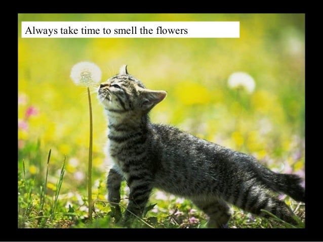Always take time to smell the flowers