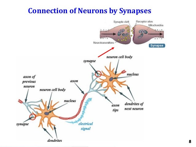 Neurons Connecting