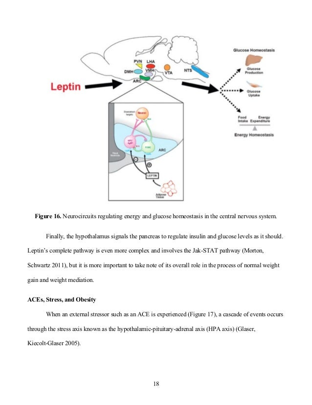 Leptin Resistance and Obesity