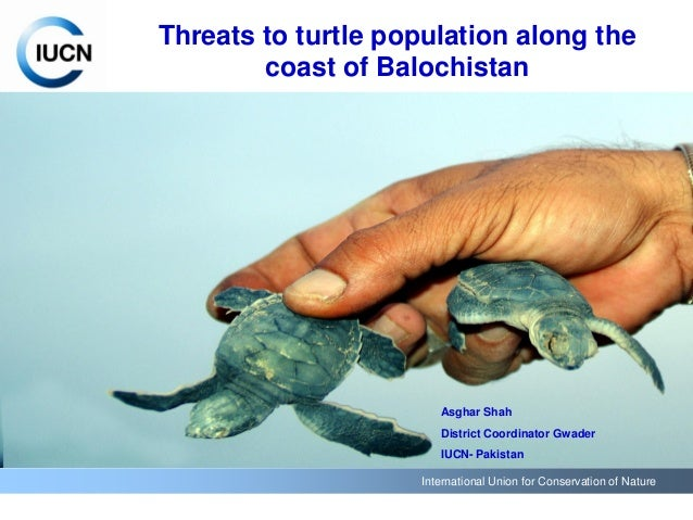 International Union for Conservation of Nature Threats to turtle population along the coast of Balochistan Asghar Shah Dis...
