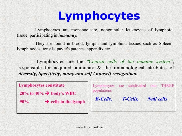 """Lymphocytes  Lymphocytes are mononucleate, nongranular leukocytes of lymphoid  Lymphocytes are the """"Central cells of the i..."""