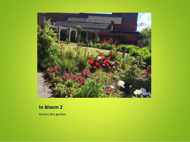 In bloom 2 Across the garden