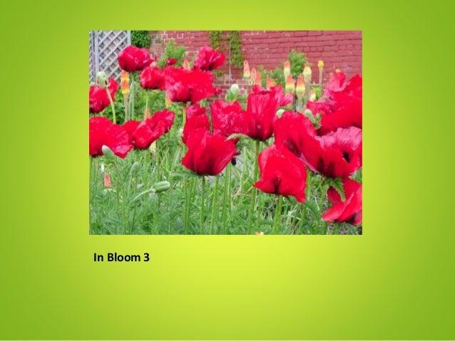 In Bloom 3