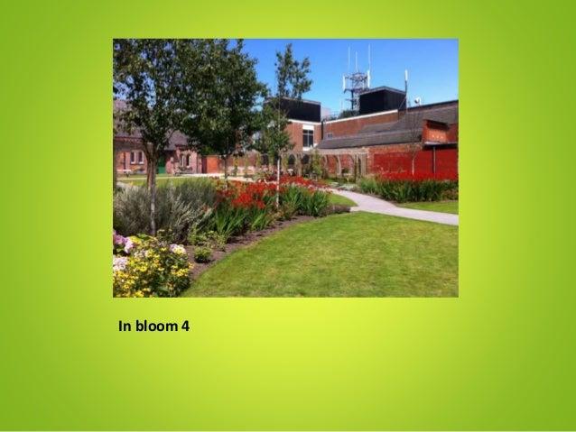 In bloom 4