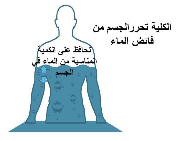 الكليةتحررالجسممن الماء فائض الكمية على تحافظ في الماء من المناسبة الجسم