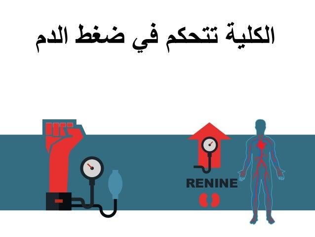الدم ضغط في تتحكم الكلية RENINE