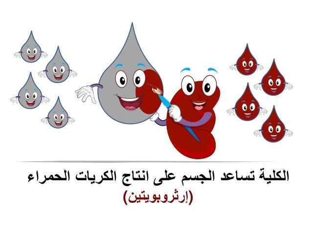 الحمراء الكريات انتاج على الجسم تساعد الكلية ()إرثروبويتين