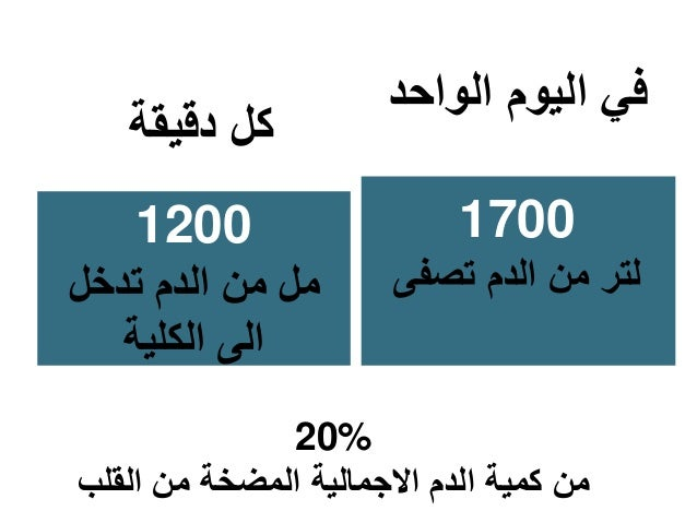 دقيقة كل 1200 تدخل الدم من مل الكلية الى الواحد اليوم في 1700 تصفى الدم من لتر 20% القلب ...