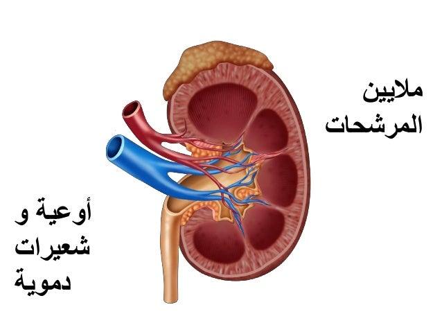و أوعية شعيرات دموية ماليين المرشحات