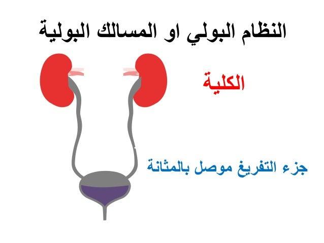 الكلية البولية المسالك او البولي النظام بالمثانة موصل التفريغ جزء