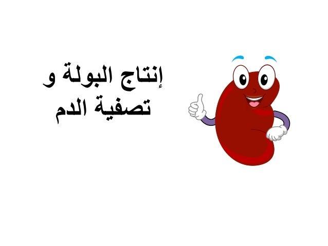 و البولة إنتاج الدم تصفية