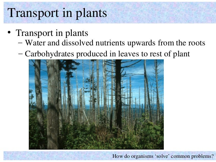 Transport in plants• Transport in plants  – Water and dissolved nutrients upwards from the roots  – Carbohydrates produced...