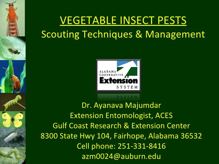 VEGETABLE INSECT PESTS Scouting Techniques & Management Dr. Ayanava Majumdar Extension Entomologist, ACES Gulf Coast Resea...