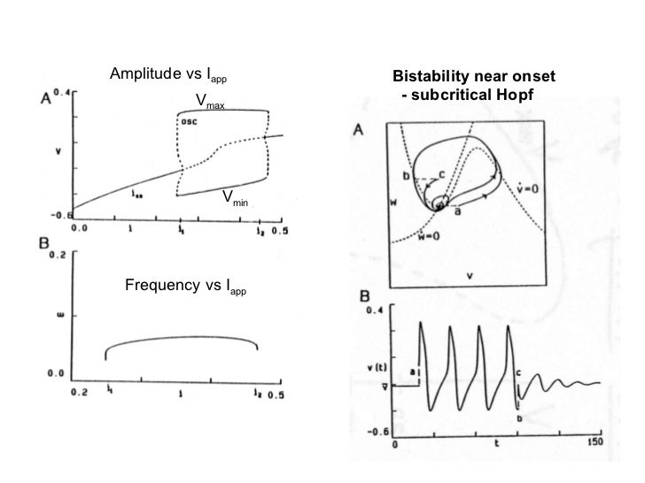the fitzhugh-nagumo model bifurcation and dynamics pdf