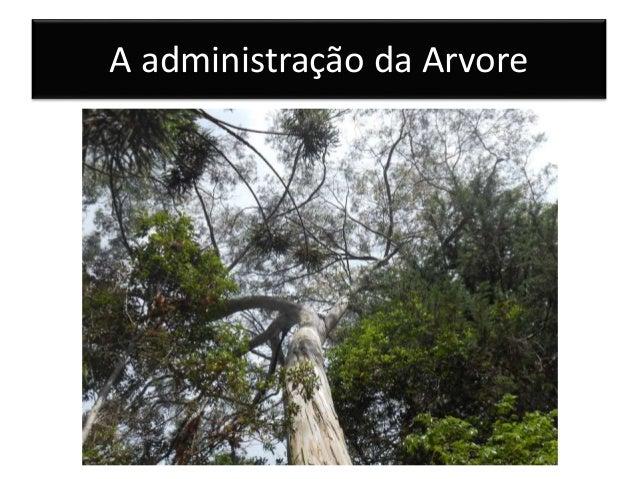 A administração da Arvore