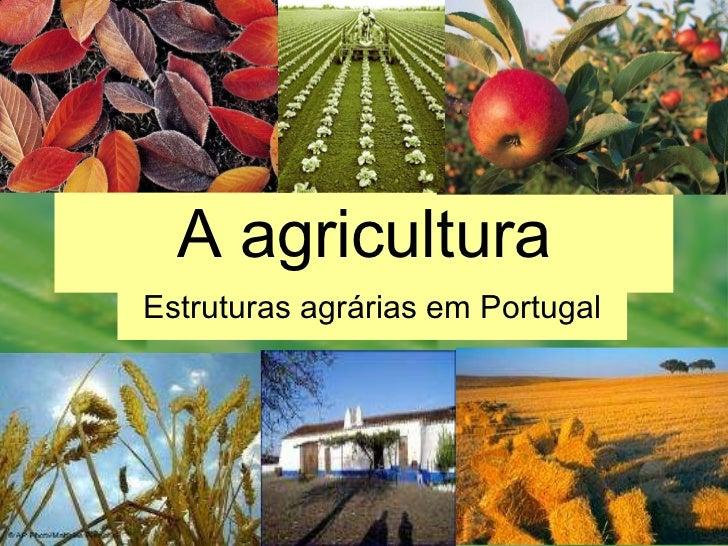 A agricultura Estruturas agrárias em Portugal